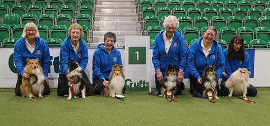 SHETLAND SHEEPDOGS HAILED NATION'S MOST OBEDIENT BREED AFTER WINNING 'OBREEDIENCE' FINAL AT CRUFTS
