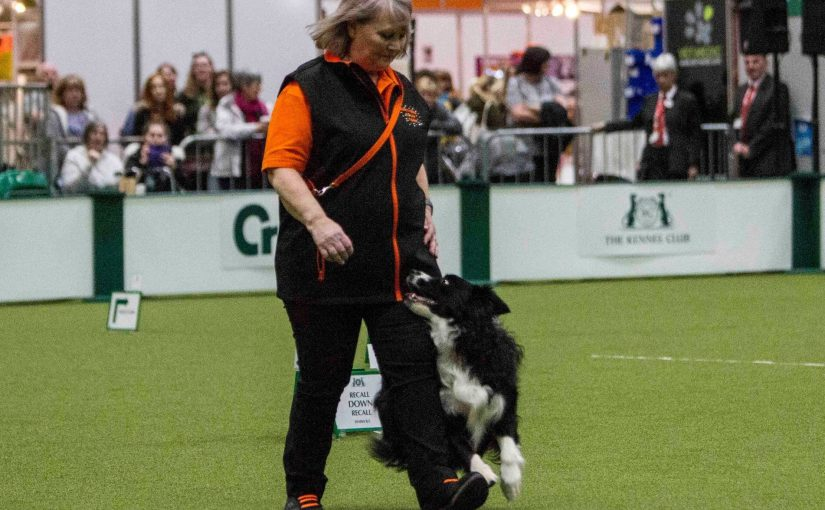 FIRST EVER RALLY WARRANT TITLE GOES TO BORDER COLLIE